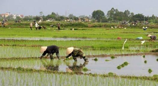 越南人口近億,國土卻僅有中國三十分之一,為何還有稻米出口呢?